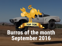 Trophy Burro Top 10 Burros of the month September 2016