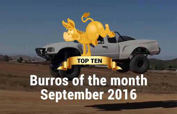 Burro Of The Month September